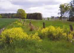 Ortschaft Dreeßel: Wiese©Stadt Visselhövede
