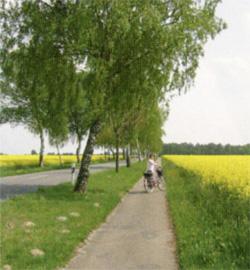 Ortschaft Nindorf: Fahrradweg zwischen Feldern©Stadt Visselhövede